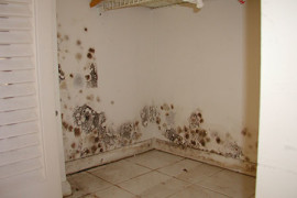 mold-removal1