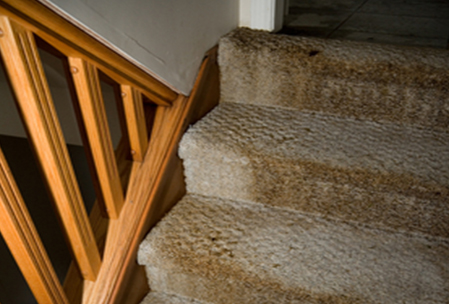 Carpet needing water damage clean up Skokie, IL